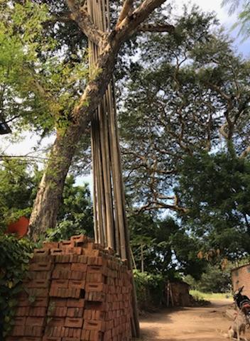 Bamboo in Myinkabar Village